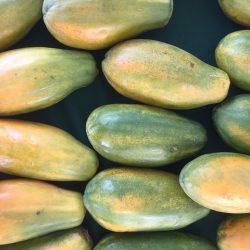 papaya-5948720_640