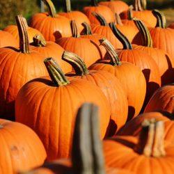 pumpkin-970235_640