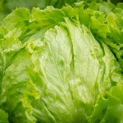 salad-3505392_640
