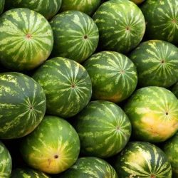 watermelons-2636_640